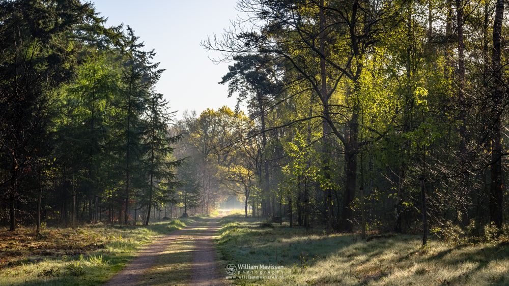 Photo in Nature #geijsteren #venray #oostrum #landgoed geijsteren #noord-limburg #limburg #woods #nature #forest #mist #light #willibrorduskapel #trees #path