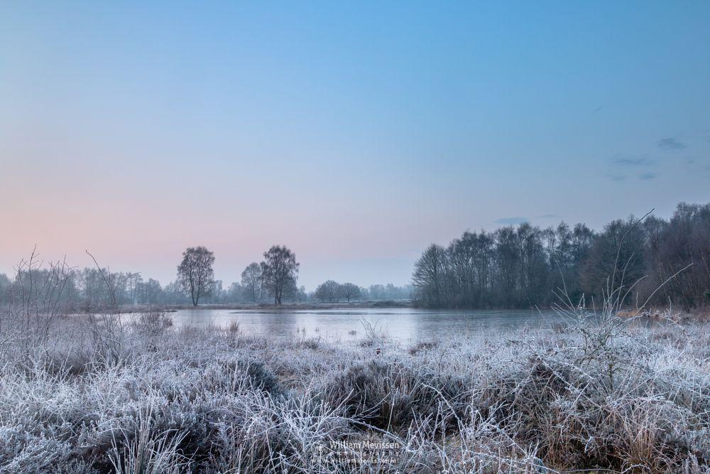 Photo in Landscape #bergerheide #maasduinen #limburg #bergen #nature #frozen #rondven #frost #twilight #sunrise #fen #light #winter #trees #noord-limburg #nieuw-bergen