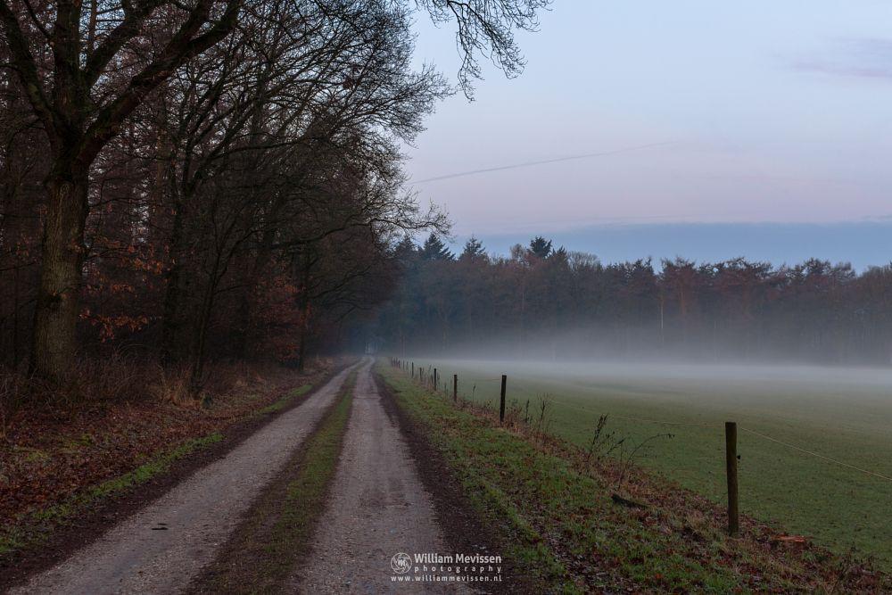Photo in Landscape #venray #merselo #limburg #noord-limburg #nature #frost #farmland #grasses #mist #tree #path #dirtroad #road