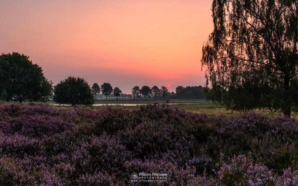 Photo in Landscape #forest #woods #heathland #maasduinen #limburg #noord-limburg #nieuw-bergen #bergen #national park #nature #light #land #trees #ceresweg #eckeltsebergen #sunrise #fen #heather #cloudy #sun #red