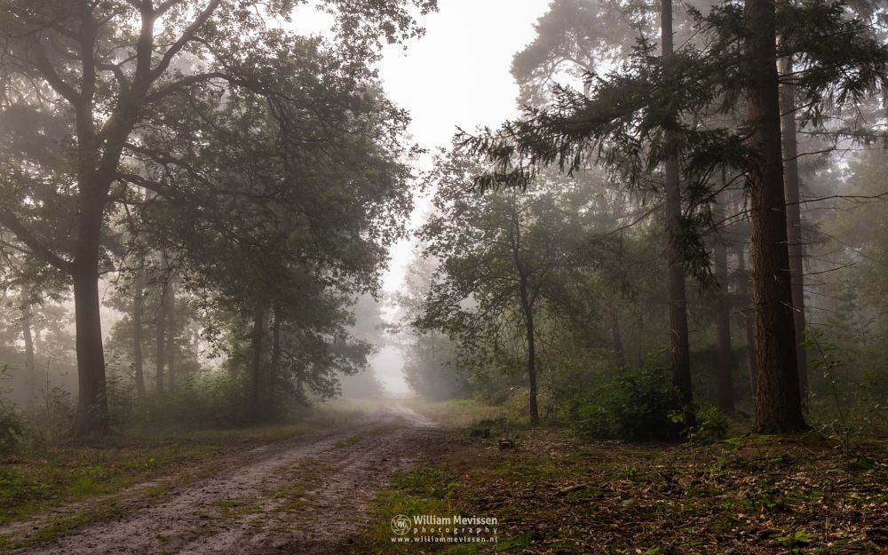 Photo in Nature #geijsteren #venray #oostrum #landgoed geijsteren #limburg #noord-limburg #nature #forest #woods #light #geysteren #tree #trees #path #mist #misty #fog #foggy