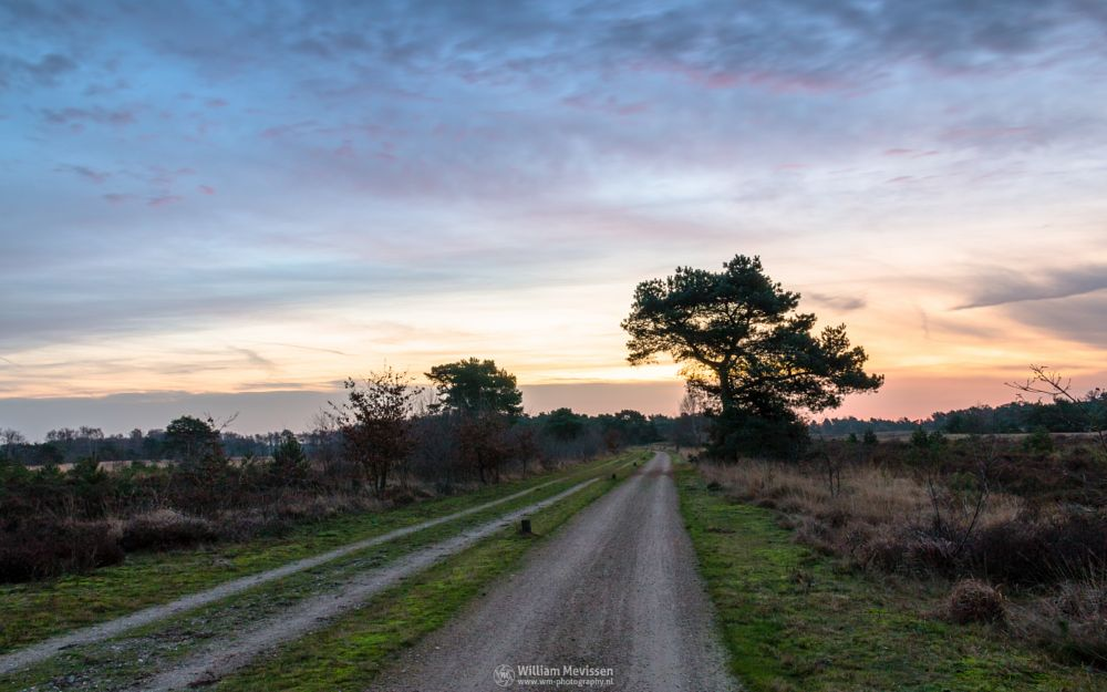 Photo in Landscape #bergerheide #heathland #forest #maasduinen #limburg #noord-limburg #woods #nieuw-bergen #bergen #national park #nature #sand #tree #sky #clouds #purple #twilight #dawn #dirt road #road #bend #path #trees #sanddunes #dunes