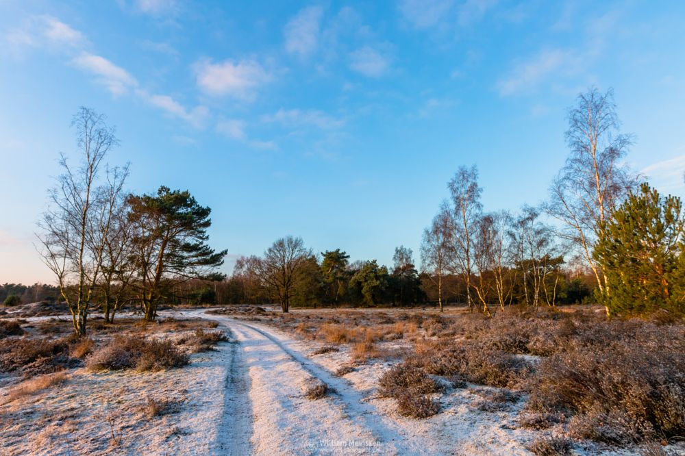 Photo in Nature #bergerheide #forest #woods #heathland #maasduinen #limburg #noord-limburg #nieuw-bergen #bergen #national park #nature #sand #dunes #sanddunes #tree #trees #sky #clouds #twilight #snow #ice #winter #heather #path #sunrise #sun