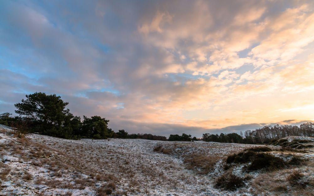 Photo in Landscape #bergerheide #forest #woods #heathland #maasduinen #limburg #noord-limburg #nieuw-bergen #bergen #national park #sand #nature #dunes #sanddunes #tree #trees #sky #clouds #twilight #snow #ice #winter #heather #cloudy #sunrise #sun