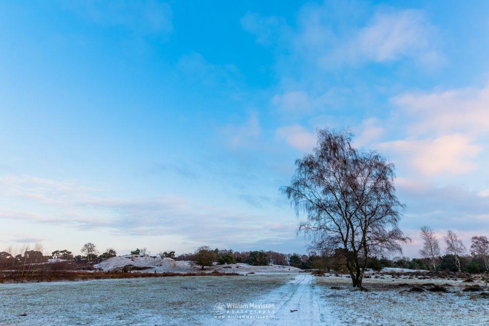 Photo in Landscape #bergerheide #forest #woods #heathland #maasduinen #limburg #bergen #national park #nature #sand #dunes #sanddunes #tree #birch #sky #snow #winter #heather #clouds #sunrise #sun #nieuw-bergen #noord-limburg