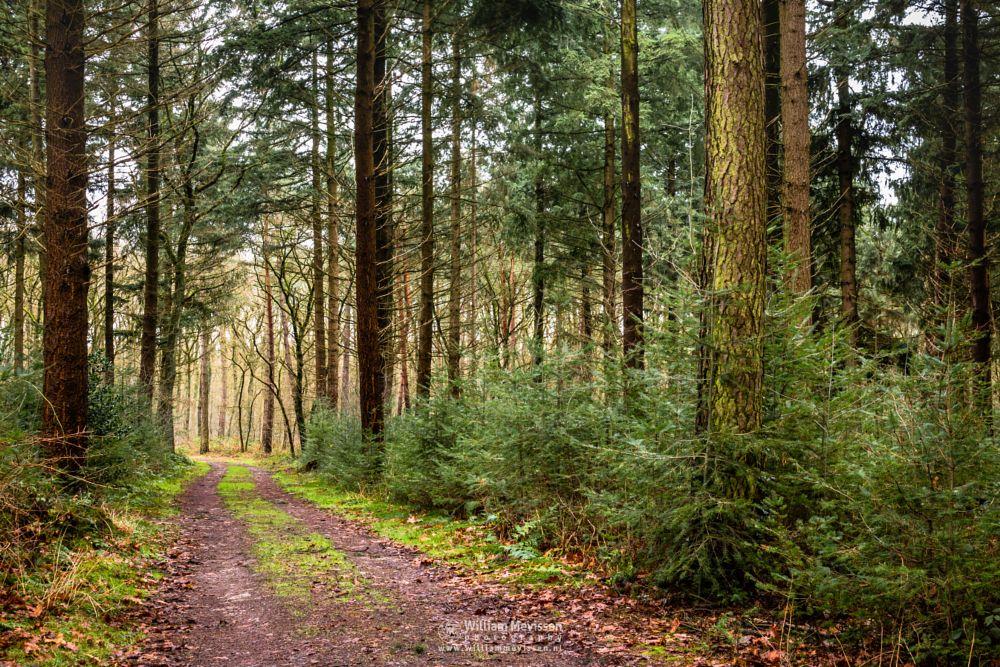 Photo in Nature #geijsteren #venray #oostrum #aostrum #landgoed #landgoed geijsteren #geysteren #weichs de wenne #estate #noord-limburg #limburg #forest #woods #path #nature #nature reserve #winter #tree #trees #orange #foliage