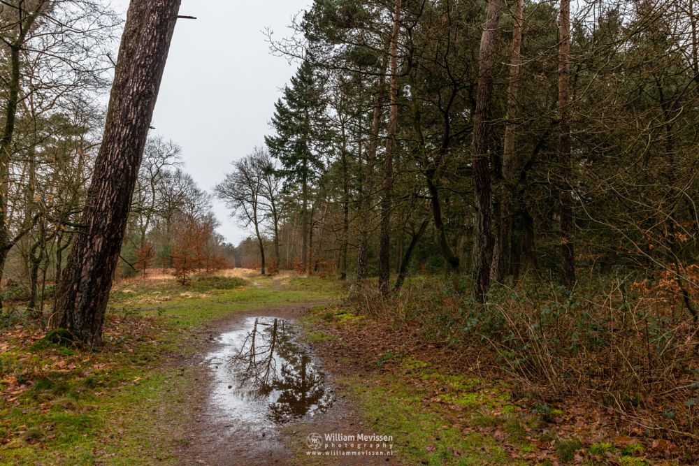 Photo in Nature #geijsteren #venray #oostrum #landgoed geijsteren #estate #landgoed #weichs de wenne #limburg #noord-limburg #nature #nature reserve #forest #woods #winter #geysteren #foliage #path #puddle #tree #trees