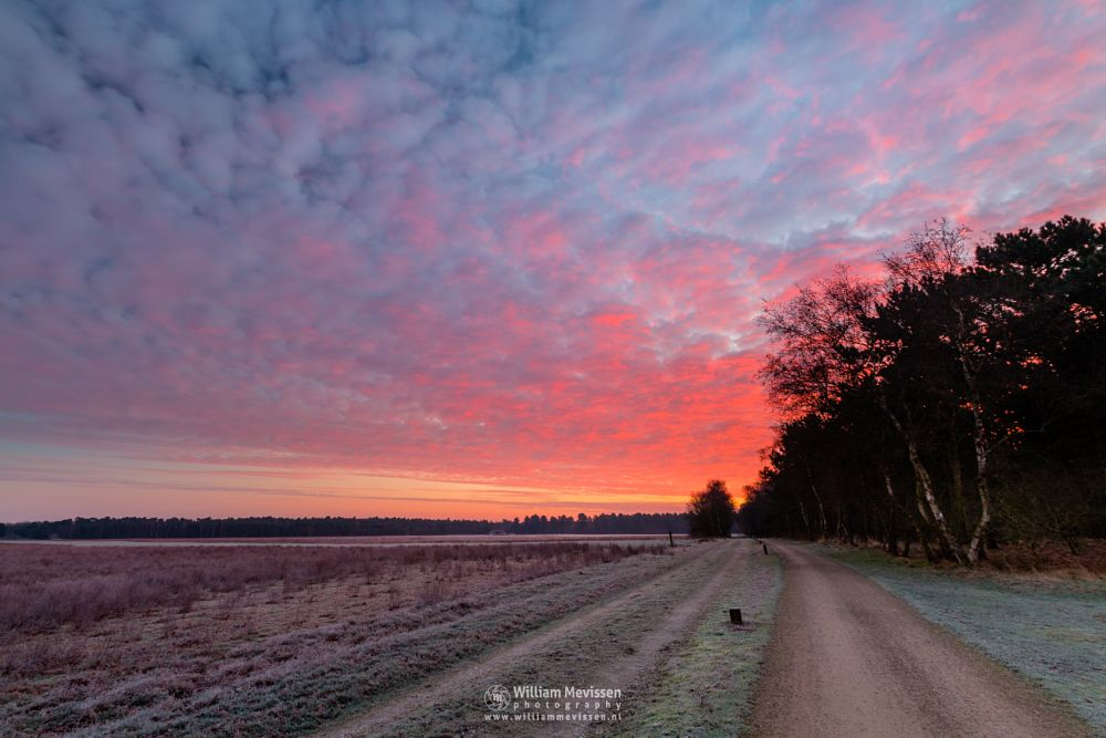 Photo in Landscape #bergerheide #woods #heathland #fen #maasduinen #limburg #forest #noord-limburg #nieuw-bergen #national park #bergen #frosty #nature #frost #sand #dunes #sanddunes #path #winter #sunrise #twilight #dirt road #schaapskooi #sheepfold #red