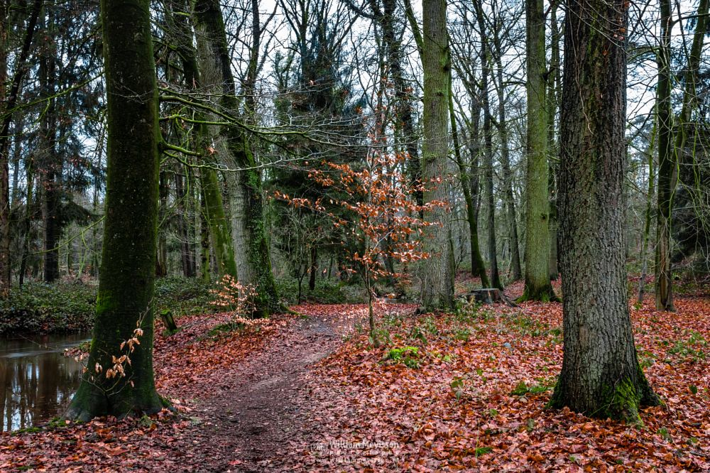 Photo in Nature #geijsteren #venray #oostrum #landgoed #landgoed geijsteren #weichs de wenne #limburg #noord-limburg #nature #nature reserve #forest #woods #leaves #geysteren #autumn #winter #foliage #light #tree #trees #brook #oostrumse beek