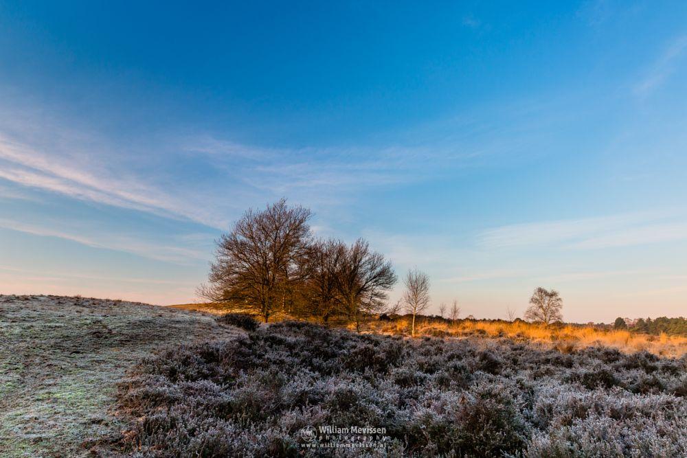 Photo in Landscape #bergerheide #forest #woods #heathland #fen #nature #maasduinen #noord-limburg #limburg #nieuw-bergen #bergen #national park #frosty #frost #sand #dunes #sanddunes #path #winter #sunrise #golden #light