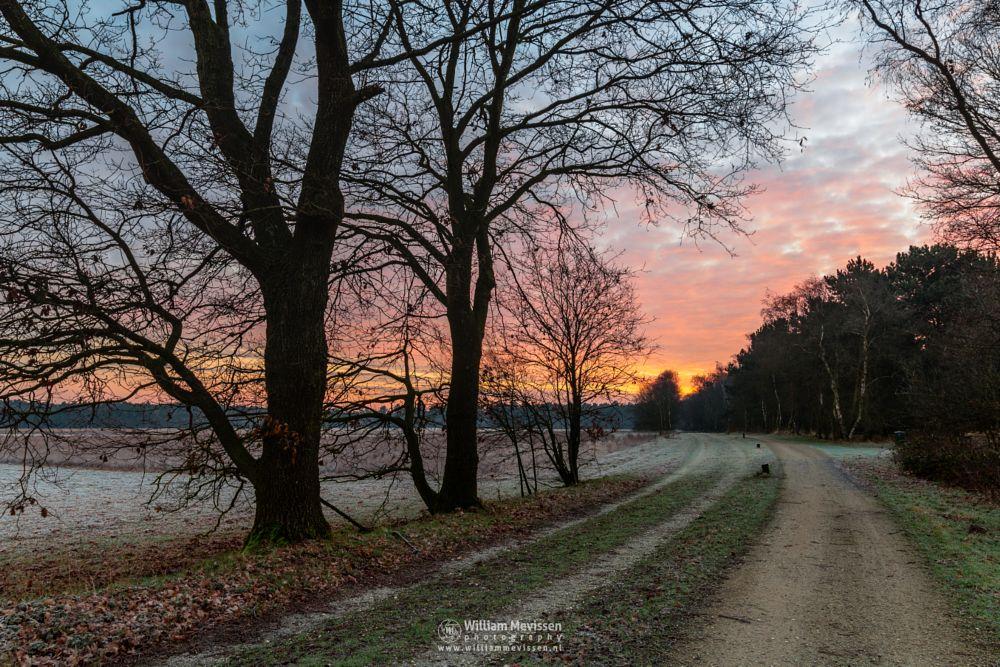 Photo in Landscape #bergerheide #forest #heathland #woods #maasduinen #silhouettes #trees #twilight #limburg #nieuw-bergen #bergen #national park #frosty #sand #frost #dunes #sanddunes #sunrise #light #winter #path #nature #noord-limburg