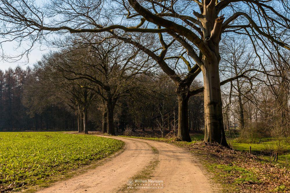 Photo in Landscape #estate #midden-limburg #horn #baexem #grathem #nature #nature reserve #forest #woods #limburgs landschap #netherlands #pine #oak #pine forest #oak forest #path #dirt road #exaten #landgoed exaten