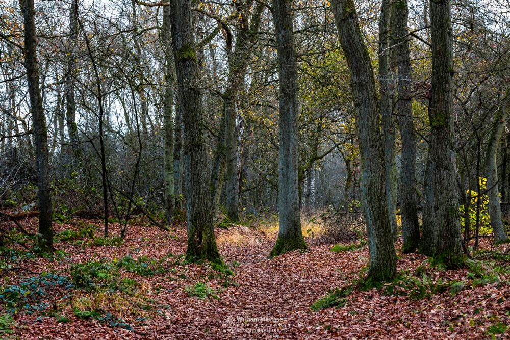 Photo in Nature #light #hamert #landgoed #landgoed de hamert #tree #maasduinen #noord-limburg #limburg #wellerlooi #national park #limburgs landschap #nature #autumn #bunch #forest #de hamert #estate #foliage