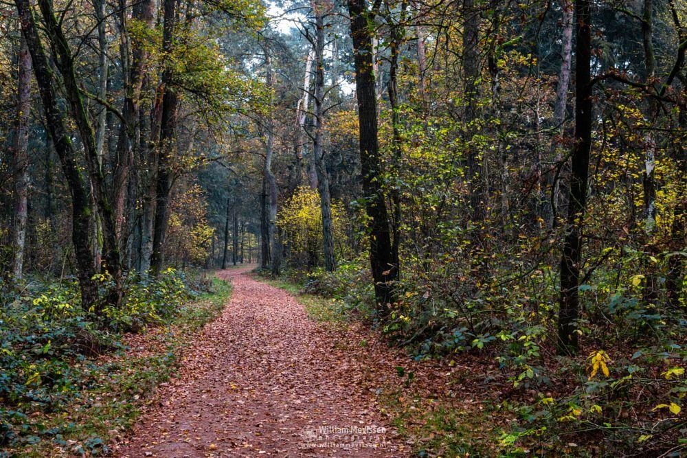 Photo in Nature #forest #nature reserve #bosserheide #tree #trees #light #maasduinen #limburg #noord-limburg #national park #well #nature #limburgs landschap #foliage #autumn #orange #yellow #green #red #path #reindersmeer