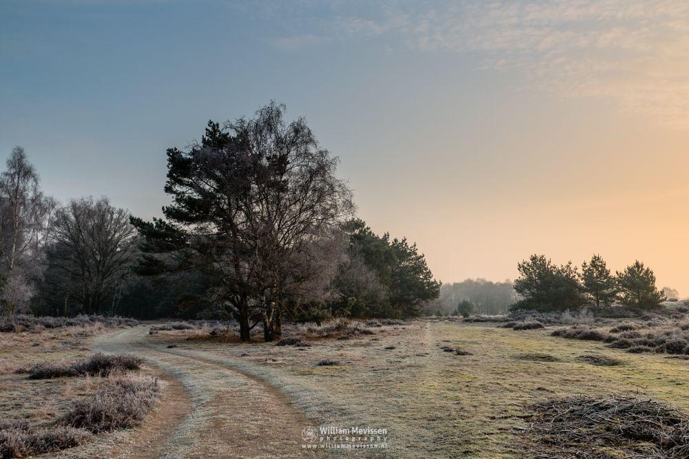 Photo in Landscape #mist #misty #fog #foggy #path #sun #sunlight #forest #nature reserve #bergerheide #woods #heathland #maasduinen #limburg #noord-limburg #nieuw-bergen #bergen #national park #nature #frost #frosty #dunes #sanddunes #sunrise #light #winter