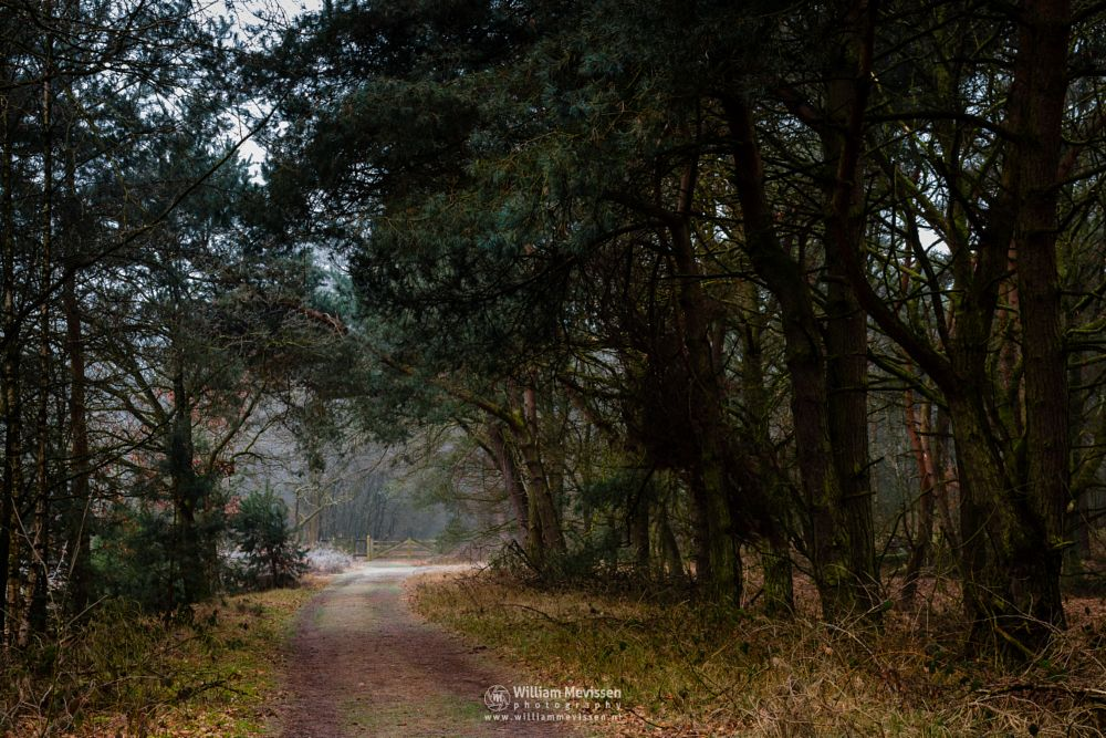Photo in Nature #bergerheide #forest #woods #maasduinen #noord-limburg #limburg #bergen #national park #nature #frosty #frost #path #winter #gate #light #tree #trees #shadow #nieuw-bergen