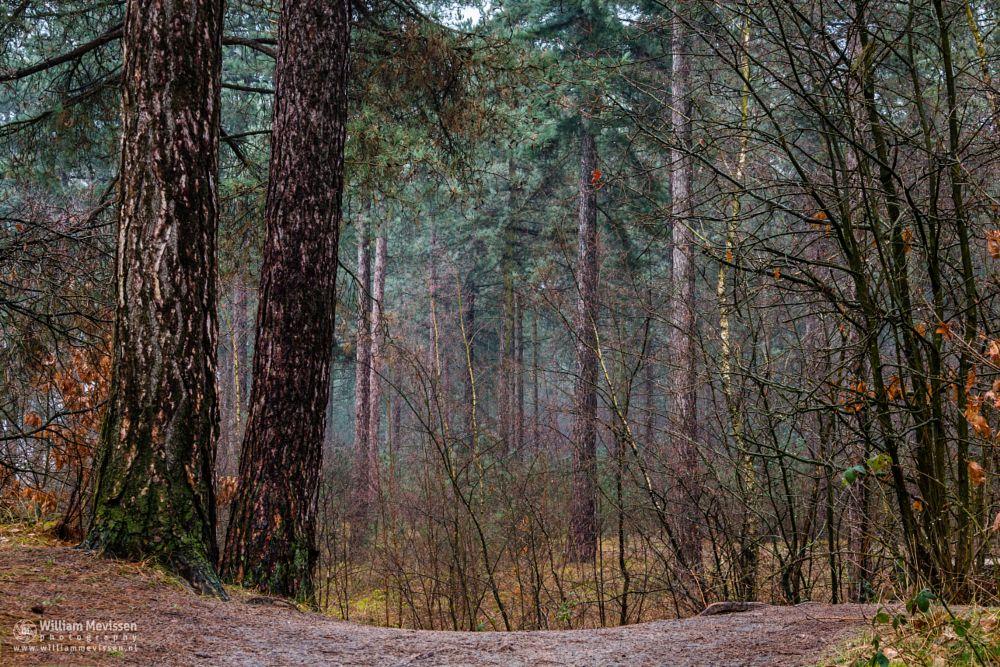 Photo in Nature #mist #misty #fog #foggy #light #green #morning #tree #trees #pine #pine forest #maasduinen #forest #trunk #silence #mood #path #pine trees #reindersmeer #lake #limburg #noord-limburg #national park #well #nature