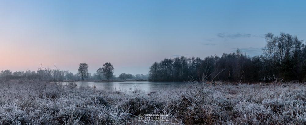 Photo in Landscape #bergerheide #forest #woods #heathland #fen #misty #foggy #fog #trees #mist #maasduinen #limburg #noord-limburg #nieuw-bergen #national park #bergen #nature #frosty #frost #winter #sunrise #light #land #clouds #silhouettes #rondven #panorama