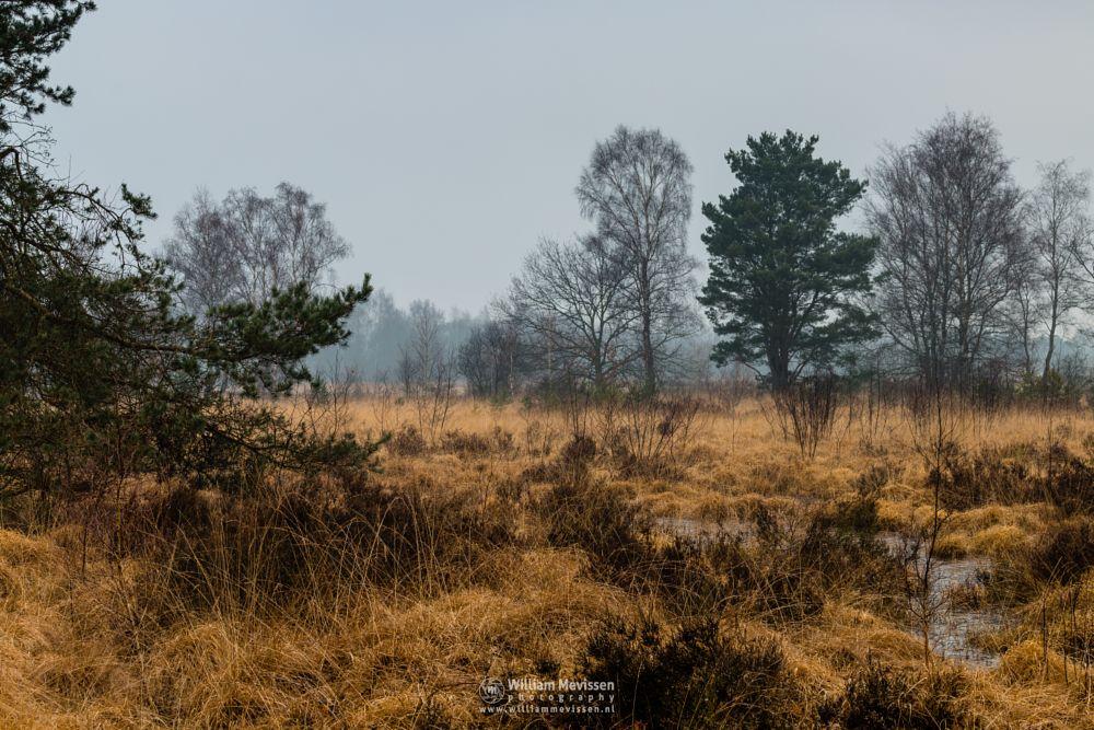 Photo in Nature #bergerheide #forest #woods #heathland #maasduinen #fen #limburg #noord-limburg #nieuw-bergen #lelieven #trees #winter #frost #sand #frosty #bergen #national park #nature