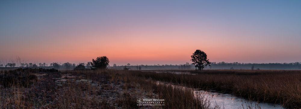 Photo in Random #light #tree #landgoed #landgoed de hamert #estate #de hamert #hamert #maasduinen #noord-limburg #limburg #wellerlooi #national park #nature #limburgs landschap #forest #trees #fen #twilight #sunrise #red #water #frost #mist #misty #foggy #fog #moor #moor grass #grass
