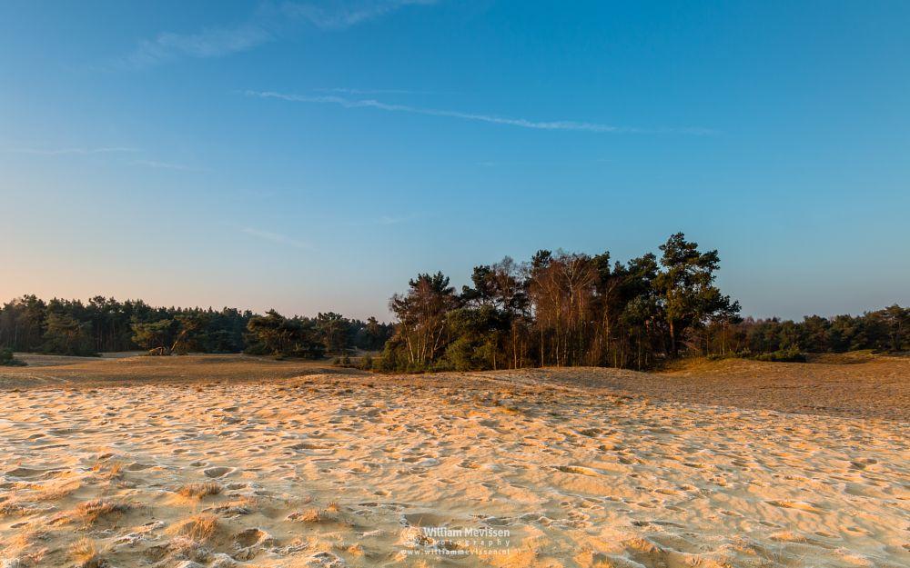 Photo in Landscape #bergerheide #forest #woods #maasduinen #limburg #nieuw-bergen #bergen #noord-limburg #national park #nature #frosty #frost #sand #dunes #sanddunes #winter #sunrise #light #land #trees #shadows