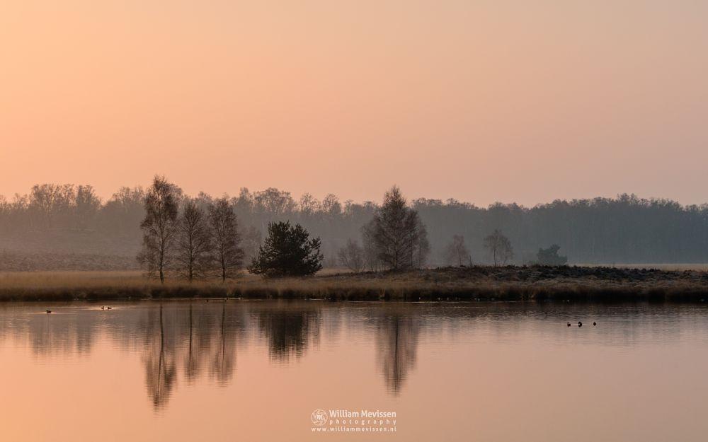 Photo in Landscape #light #foggy #tree #water #landgoed #reflections #landgoed de hamert #pikmeeuwenwater #estate #heathland #de hamert #hamert #maasduinen #noord-limburg #limburg #wellerlooi #national park #nature #limburgs landschap #trees #forest #fen #ducks #sunrise #glow #winter #pink #orange #mist #misty #fog #foggy #water #reflections #pikmeeuwenwater #heathland