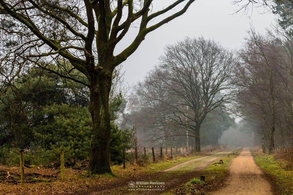 Photo in Nature #bergerheide #forest #woods #maasduinen #limburg #noord-limburg #nieuw-bergen #bergen #national park #nature #frosty #frost #sand #dunes #sanddunes #winter #mist #light #fog #misty #foggy #trees #tree #path