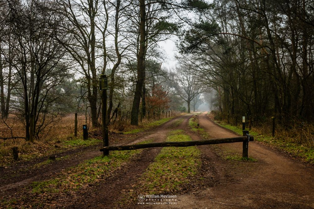 Photo in Nature #bergerheide #woods #maasduinen #forest #limburg #noord-limburg #nieuw-bergen #bergen #national park #nature #frosty #frost #sand #winter #mist #misty #foggy #path #road #dirt #tree #trees