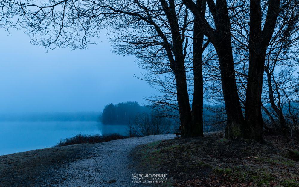 Photo in Landscape #misty #mist #fog #foggy #tree #trees #pine #pine forest #green #forest #lake #reindersmeer #maasduinen #limburg #noord-limburg #well #national park #nature #bench #silhouette #silhouettes