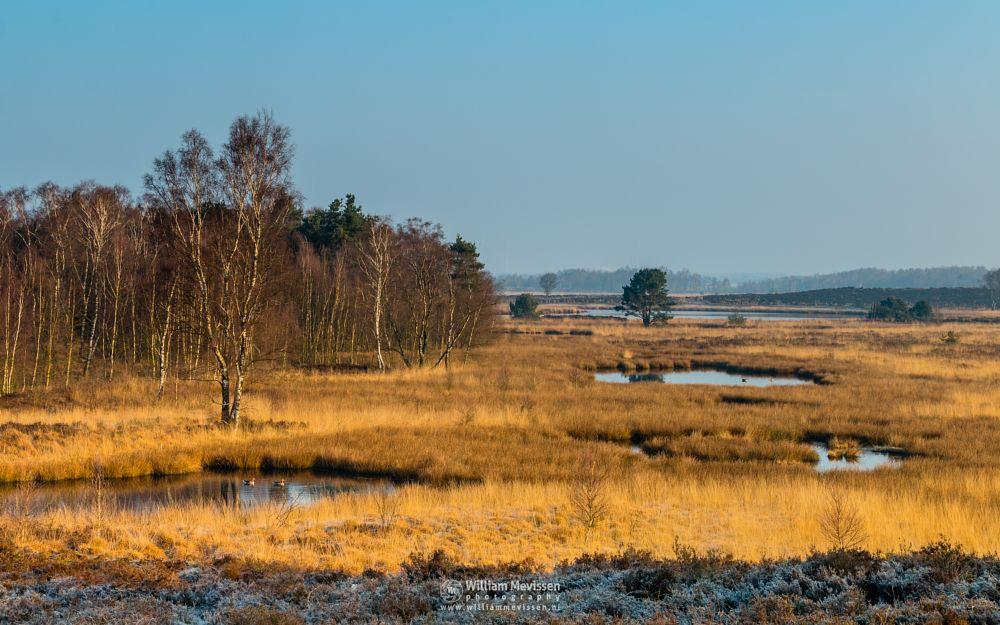 Photo in Landscape #moor #grass #misty #mist #fog #foggy #light #tree #landgoed #landgoed de hamert #estate #de hamert #hamert #maasduinen #noord-limburg #wellerlooi #limburg #national park #limburgs landschap #nature #trees #forest #sunrise #pikmeeuwenwater #heathland #heather #frost