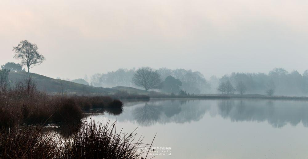 Photo in Landscape #bergerheide #forest #woods #heathland #fen #maasduinen #limburg #noord-limburg #nieuw-bergen #bergen #national park #nature #sand #dunes #silhouettes #trees #mist #misty #fog #foggy #reflections