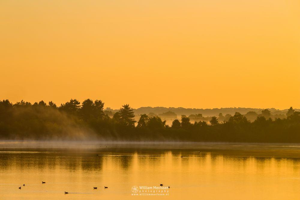 Photo in Landscape #mist #fog #gold #golden #yellow #sunrise #ducks #silhouette #mood #tree #trees #pine #pine forest #green #forest #lake #reindersmeer #maasduinen #limburg #noord-limburg #well #national park #nature