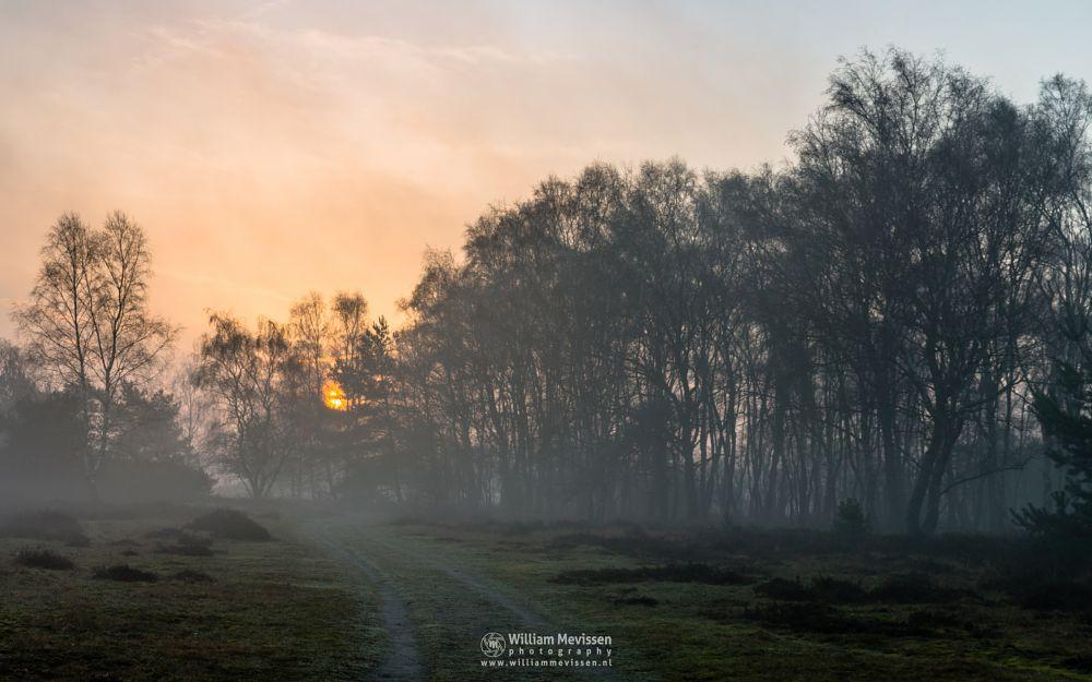 Photo in Nature #bergerheide #forest #woods #heathland #maasduinen #limburg #noord-limburg #nieuw-bergen #bergen #national park #path #nature #sunrise #light #silhouettes #trees #mist #misty #fog #foggy #heather