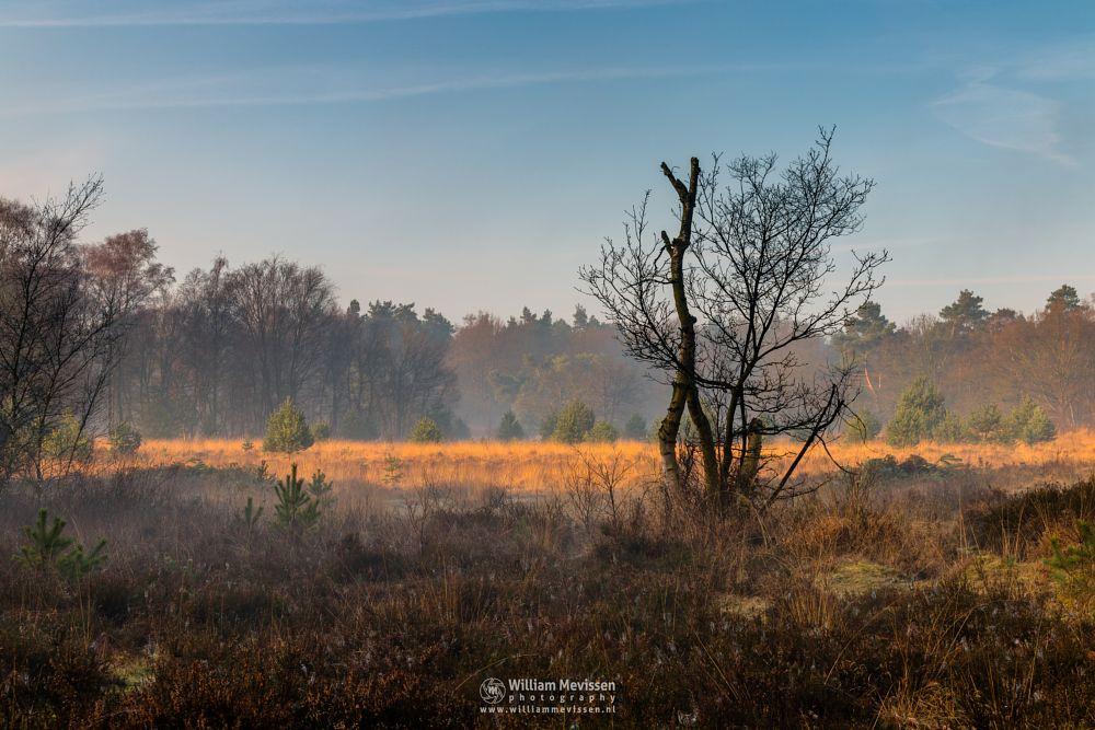 Photo in Nature #bergerheide #forest #woods #heathland #maasduinen #limburg #noord-limburg #nieuw-bergen #misty #bergen #national park #nature #sunrise #light #silhouettes #mist #fog #foggy #heather #colors #shadows #fen #trees