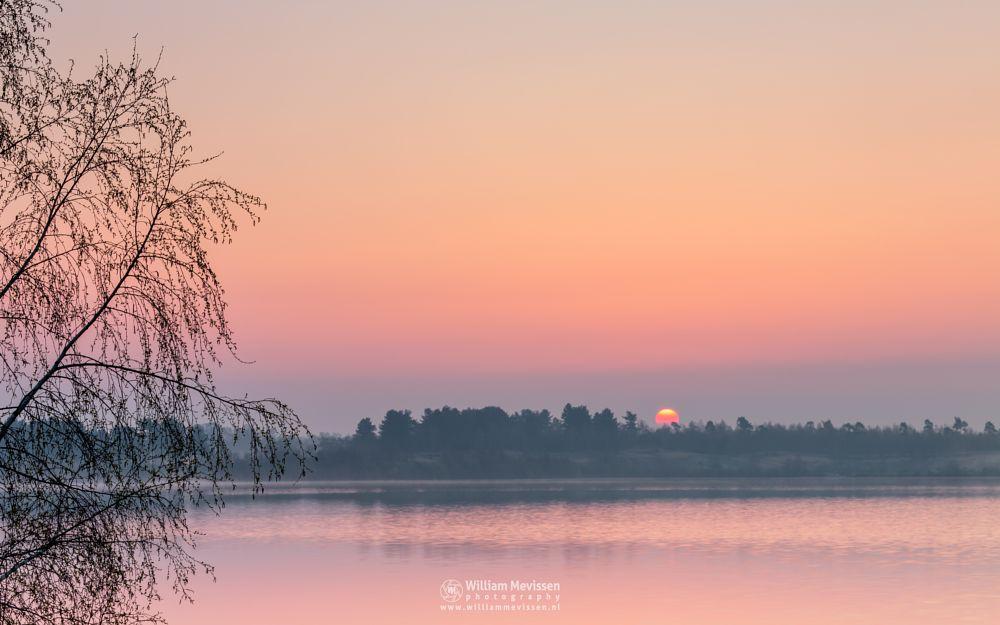 Photo in Landscape #forest #lake #limburg #maasduinen #nature #noord-limburg #pine #pine forest #reindersmeer #tree #trees #well #bergen #national park #sunrise #mist #misty #fog #foggy #light #golden light #silhouettes