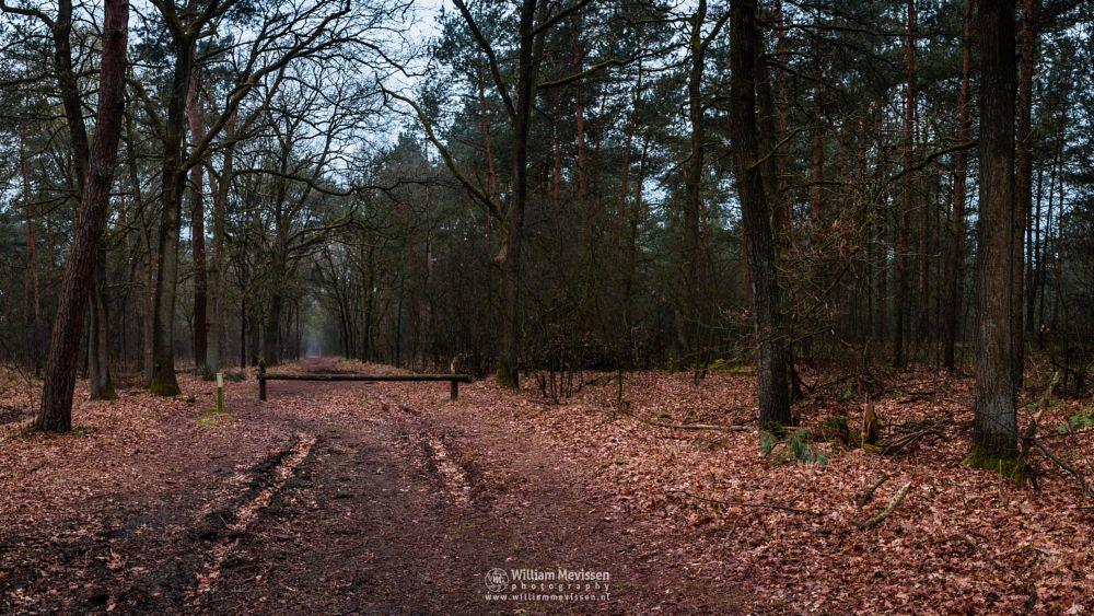 Photo in Nature #path #geysteren #foliage #light #geijsteren #oostrum #venray #landgoed #limburg #nature #nature reserve #woods #tree #trees #boshuizerbergen #landgoed geijsteren #estate #forest #pano #panorama