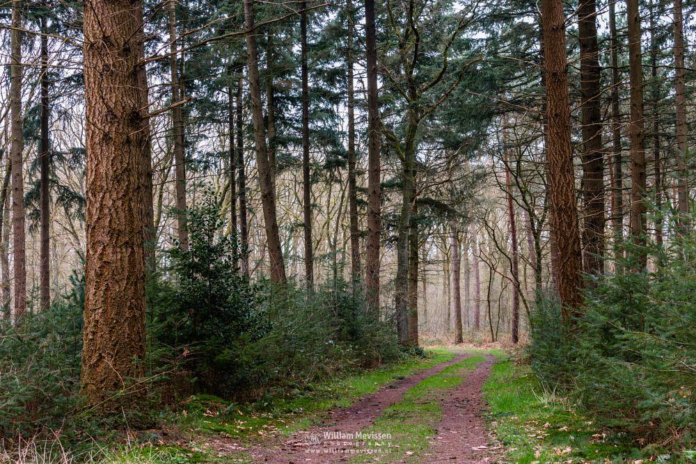Photo in Nature #geijsteren #venray #landgoed geijsteren #oostrum #estate #landgoed #weichs de wenne #limburg #noord-limburg #nature #nature reserve #forest #woods #geysteren #light #tree #trees #path #woodland