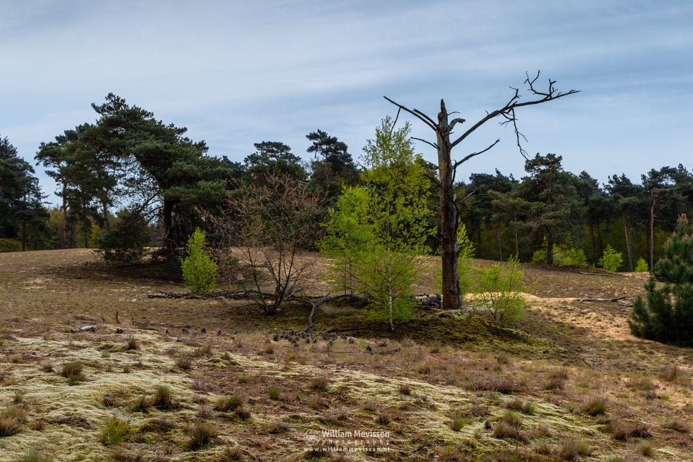 Photo in Nature #forest #nature reserve #bosserheide #tree #trees #light #national park #well #noord-limburg #limburg #maasduinen #nature #limburgs landschap #foliage #shifting sand #green #spring #cloudy