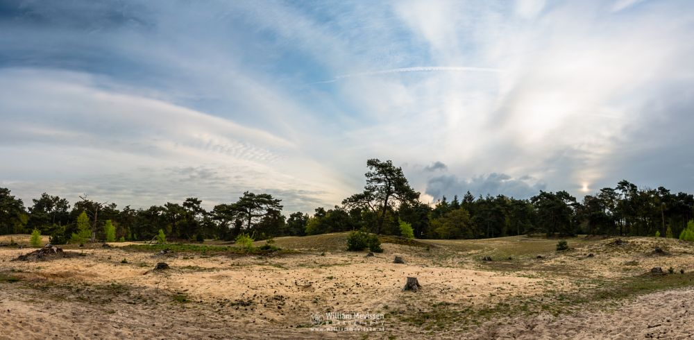 Photo in Landscape #forest #nature reserve #bosserheide #tree #trees #light #maasduinen #limburg #noord-limburg #well #national park #nature #limburgs landschap #foliage #shifting sand #green #spring #cloudy #sunrise