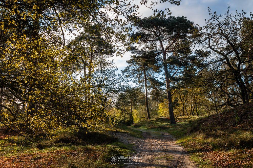 Photo in Nature #boshuizerbergen #boschhuizerbergen #limburg #noord-limburg #venray #nature #nature reserve #forest #woods #netherlands #pine #limburgs landschap #path #spring #sunrise #pine forest