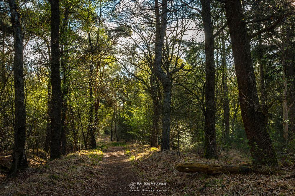 Photo in Nature #boshuizerbergen #boschhuizerbergen #limburg #noord-limburg #venray #nature #nature reserve #forest #woods #limburgs landschap #netherlands #pine #pine forest #sunrise #spring