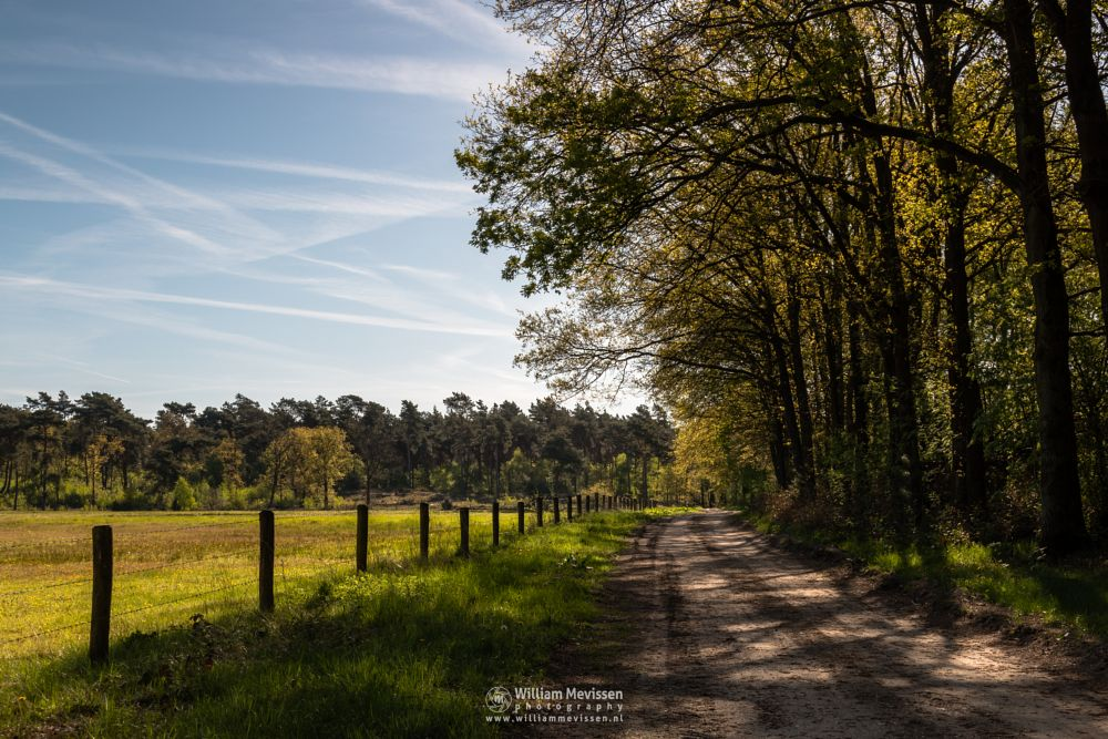 Photo in Landscape #ravenvennen #lomm #limburg #noord-limburg #arcen #nature #nature reserve #forest #woods #velden #netherlands #venlo #path #dirtroad #sun #sunny #sky #shadows #walk #green #spring