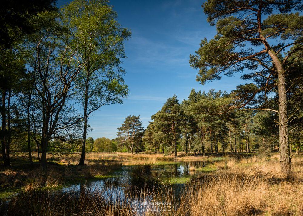 Photo in Landscape #ravenvennen #lomm #limburg #noord-limburg #arcen #nature #nature reserve #forest #woods #velden #netherlands #venlo #cloudy #fen #heatland #riverdunes #dune #swamp