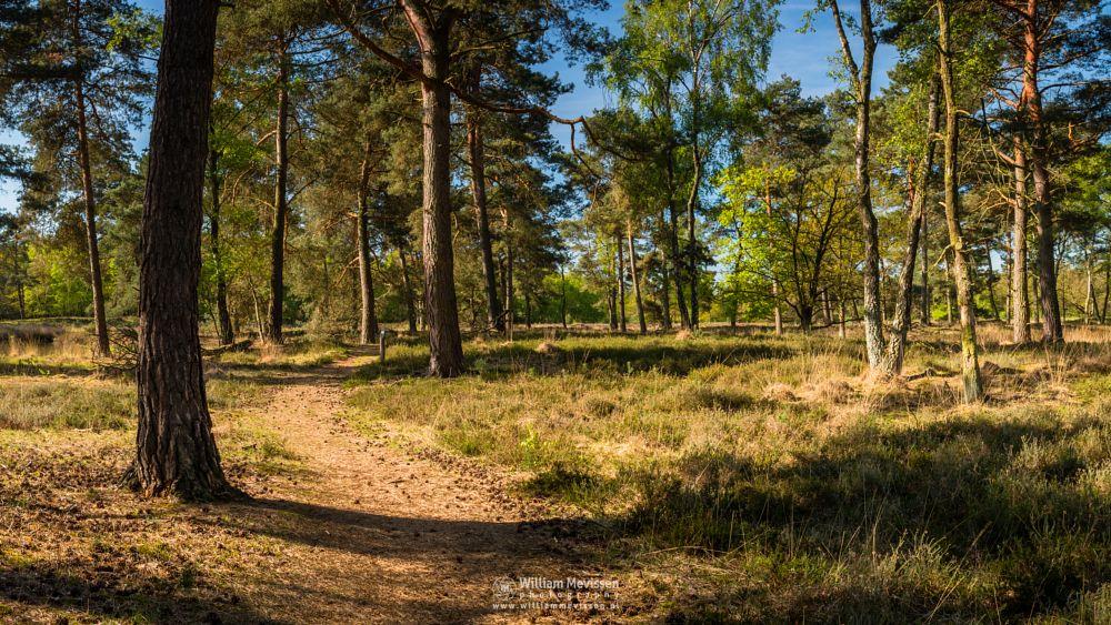 Photo in Nature #ravenvennen #lomm #limburg #noord-limburg #arcen #nature #nature reserve #forest #woods #velden #netherlands #venlo #swamp #cloudy #fen #heatland #riverdunes #dune #sunny