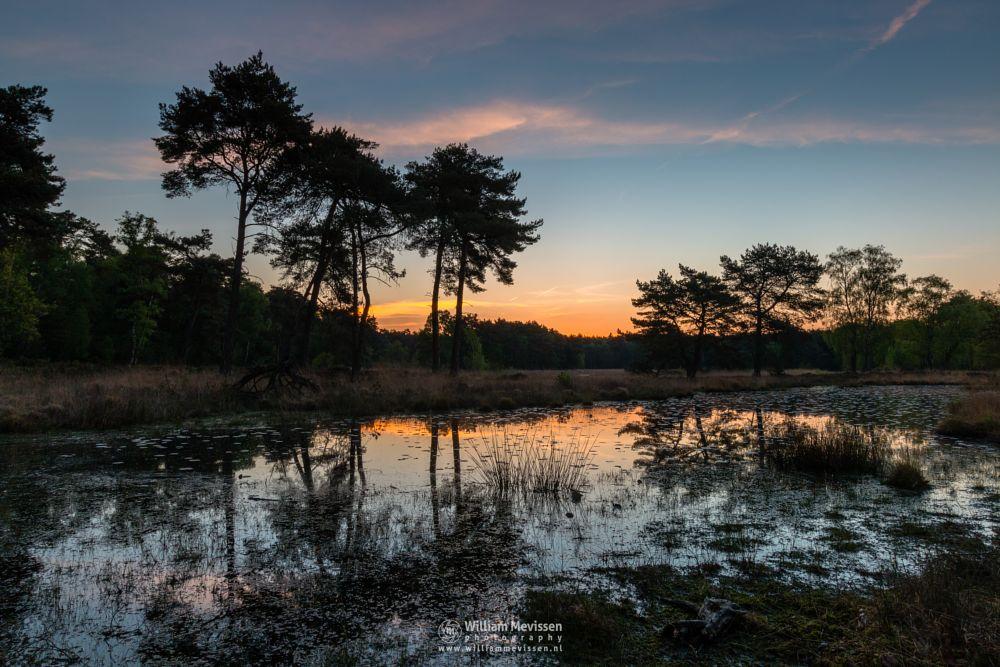 Photo in Landscape #ravenvennen #forest #lomm #limburg #noord-limburg #arcen #nature #nature reserve #woods #velden #netherlands #venlo #twilight #sunrise #pink #silence #fen #heatland #riverdunes #dune #swamp