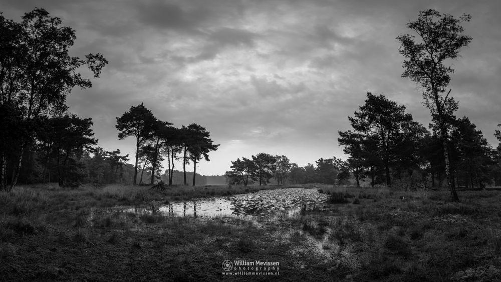Photo in Black and White #ravenvennen #lomm #limburg #noord-limburg #arcen #nature #nature reserve #forest #woods #velden #netherlands #venlo #cloudy #fen #heatland #riverdunes #dune #swamp #mist #fog #grey #b&w #blackandwhite