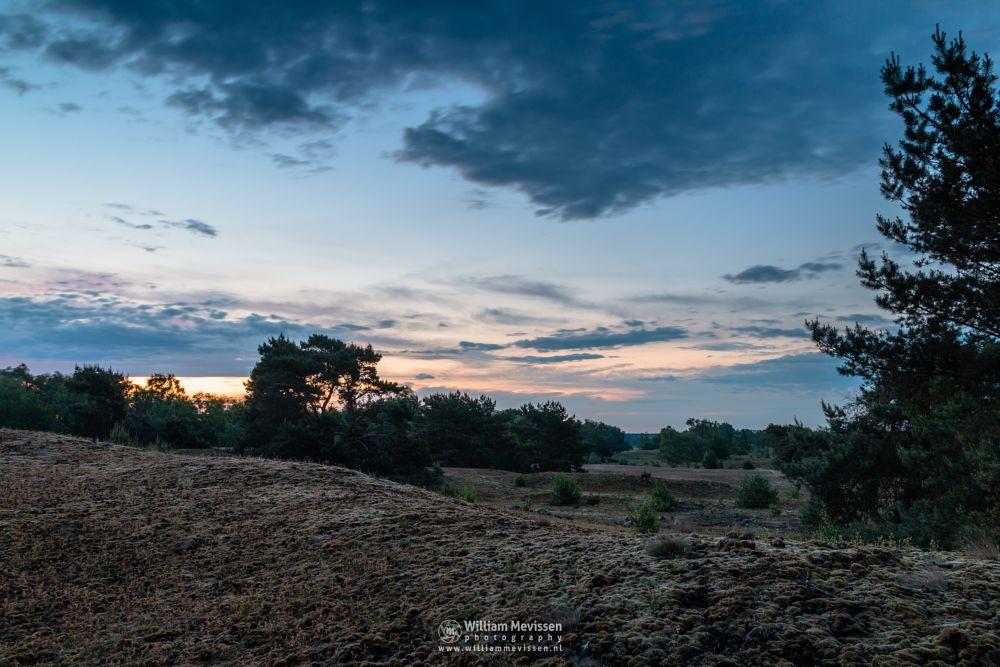 Photo in Landscape #bergerheide #forest #woods #heathland #fen #maasduinen #limburg #noord-limburg #nieuw-bergen #bergen #national park #nature #sand #dunes #sanddunes #sunrise #light #clouds #trees #twilight