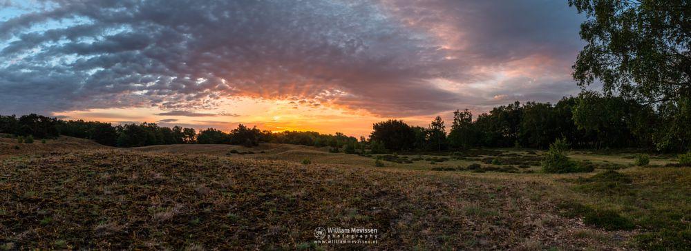Photo in Landscape #limburg #bergerheide #forest #woods #heathland #maasduinen #noord-limburg #nieuw-bergen #bergen #national park #nature #sand #dunes #sanddunes #sunrise #light #land #clouds #trees #pano #burst #colors #rays #colours