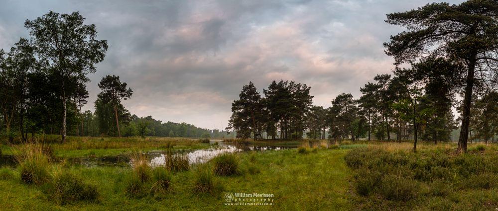 Photo in Landscape #ravenvennen #lomm #limburg #noord-limburg #arcen #nature #nature reserve #forest #woods #velden #netherlands #venlo #cloudy #fen #heatland #riverdunes #dune #swamp #painted #sky #clouds
