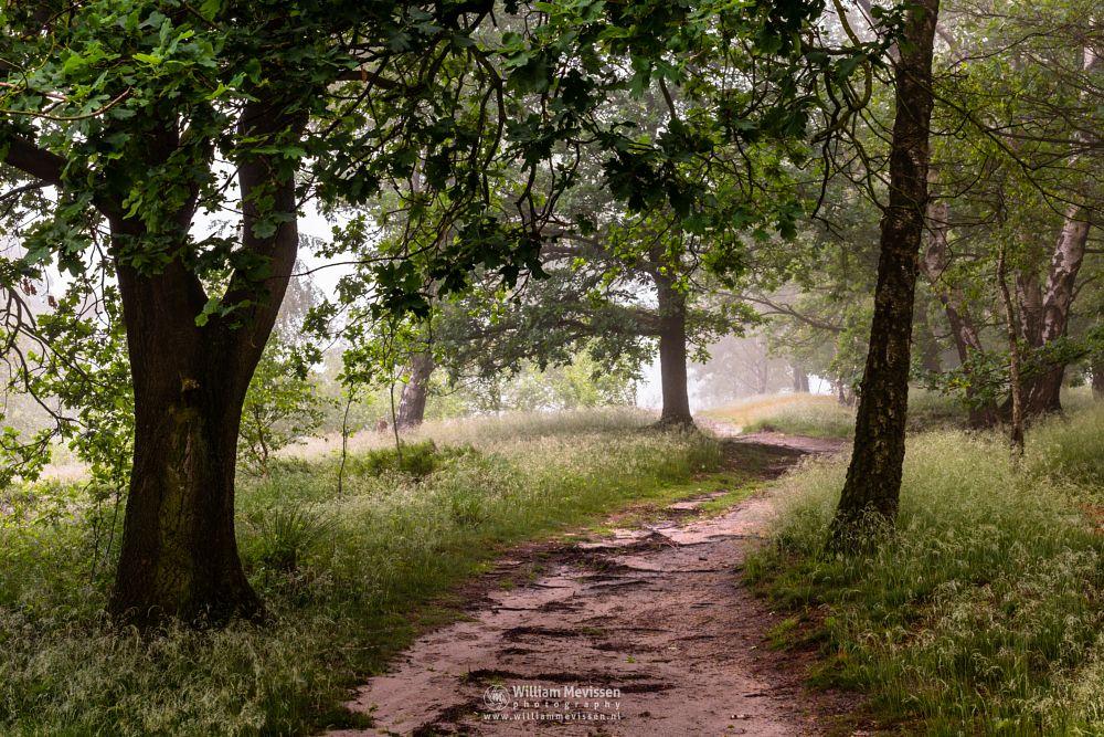Photo in Nature #light #tree #landgoed #landgoed de hamert #de hamert #hamert #maasduinen #noord-limburg #limburg #limburgs landschap #wellerlooi #national park #nature #trees #forest #curvy #path #mist #fog #foggy #silhouettes #route #birch